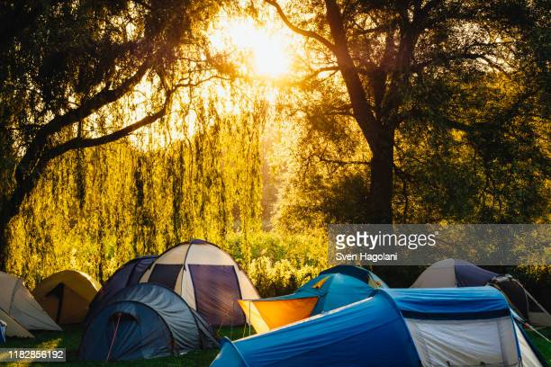 tents under sunny trees at campsite - mecklenburg vorpommern stock pictures, royalty-free photos & images