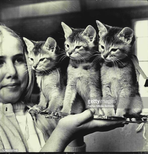 Tenyearold Marilyn Andersen of Keperra Brisbane makes friends with twomonthsold triplets Romulus Rasselas and Remus at St Luke's Hall in Mosman...