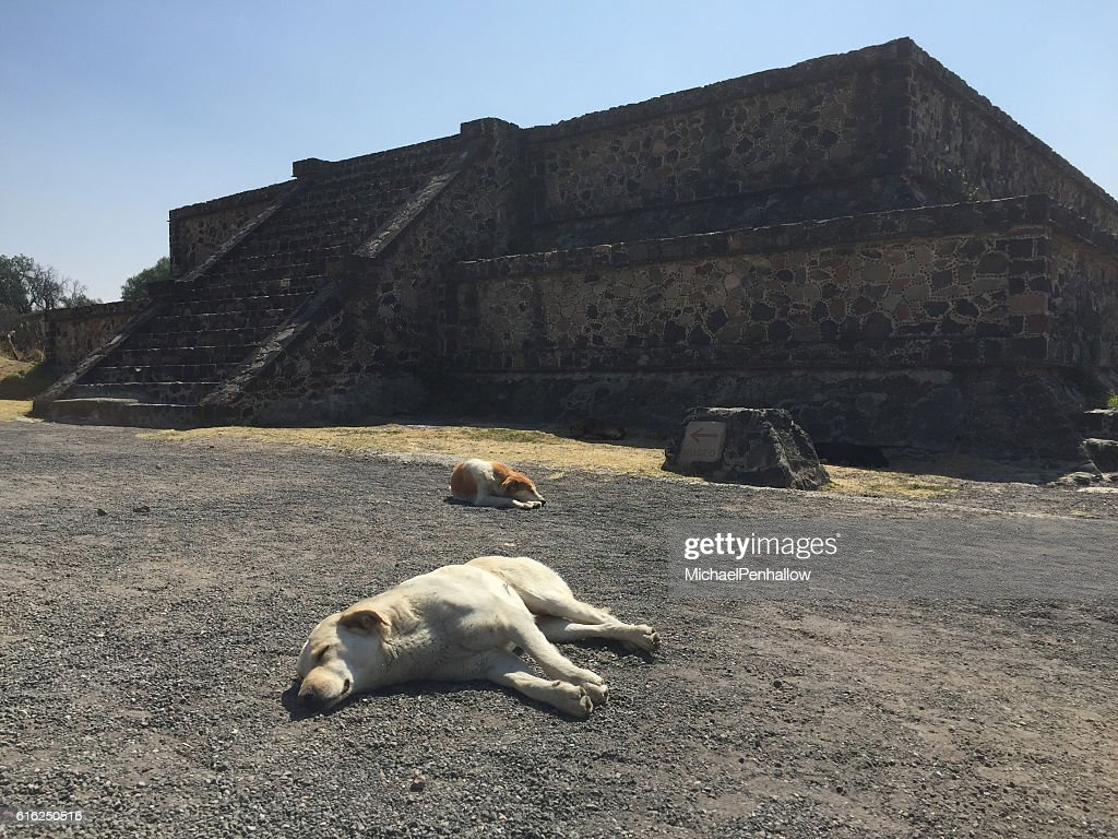 Teotihuacan, sleeping dogs : Stock Photo