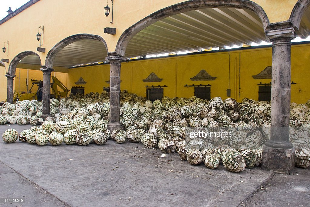 Tequila industry : Stock Photo