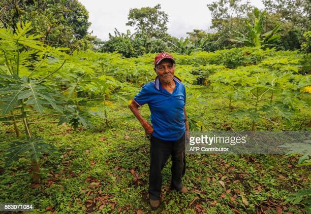 Terencio Flores checks the papaya trees at the 'San Dionisio' farm where he grew coffee and now grows fruit and ornamental trees due to the loss of...