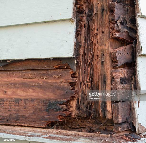 termite and rot damage - rot stock photos and pictures