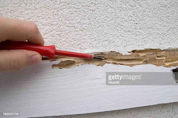 Termite Schäden