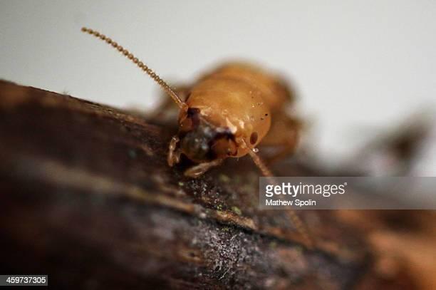 termite greetings - termite photos et images de collection
