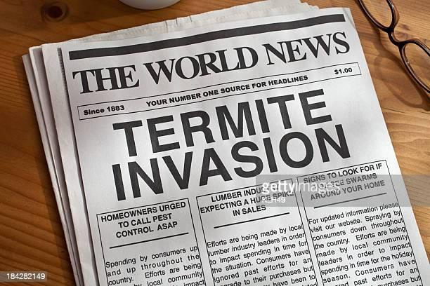 termite invasion titre de journal - termite photos et images de collection