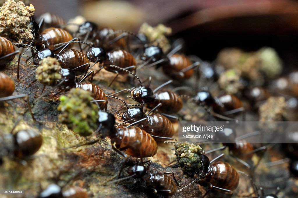 Termite Migration : Stock Photo