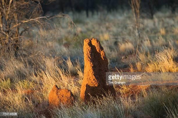 Termite mound at Simpson's Gap West Madonnell Mountain Range Australia