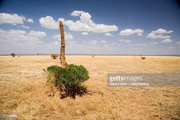 Termite mound, Lower Omo Valley, Ethiopia, Africa