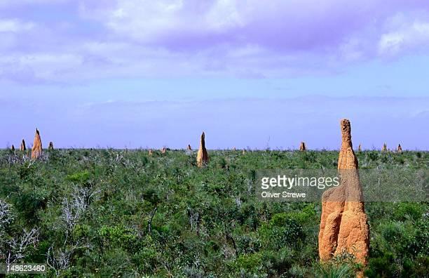 termite mounds in heathlands reserve, cape york - termite photos et images de collection