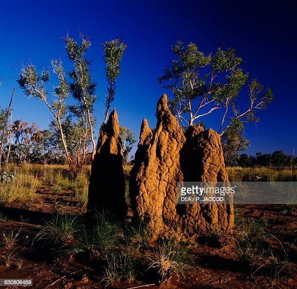 Termite mount between Mount Isa and Camooweal Queensland Australia