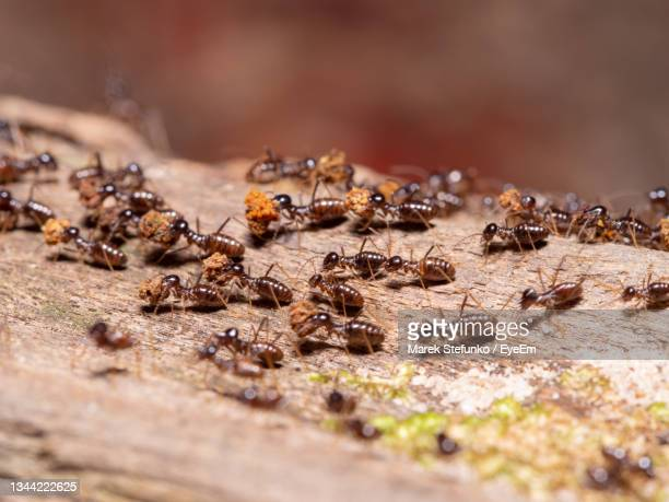 termites in a tropical rainforest - marek stefunko stock pictures, royalty-free photos & images