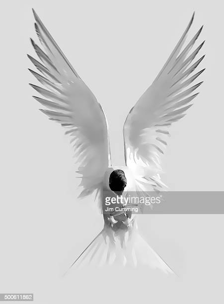 tern landing - animal wing stock pictures, royalty-free photos & images