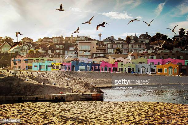 Terns and Colorful Houses on Capitola Beach