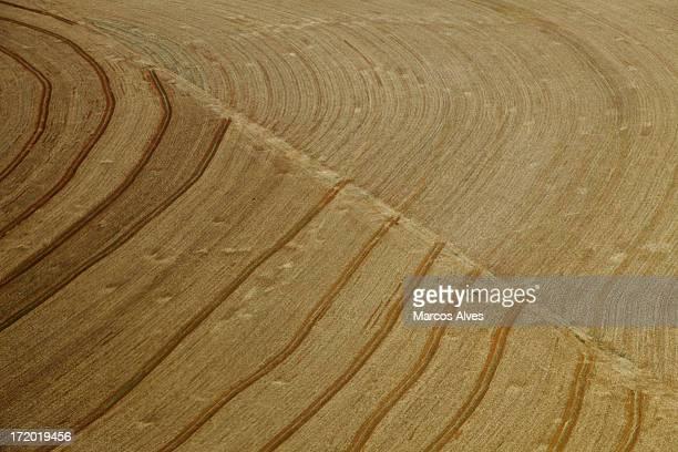 terra. agricultura.