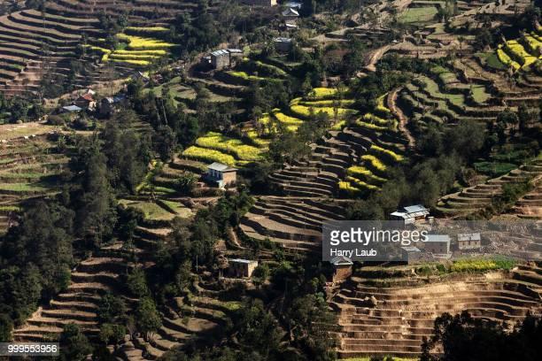Terrace cultivation, field terraces at Nagarkot, Nepal