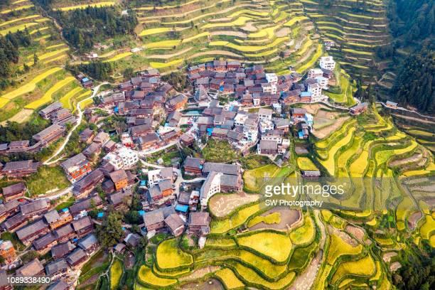 terrace field located in guizhou, china - terrassenfeld stock-fotos und bilder