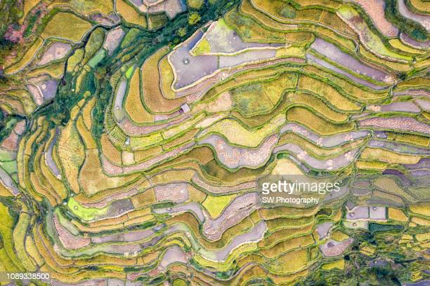 terrace field located in guizhou, china - province du guizhou photos et images de collection