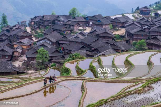 terrace fields,guizhou,china - terrassenfeld stock-fotos und bilder