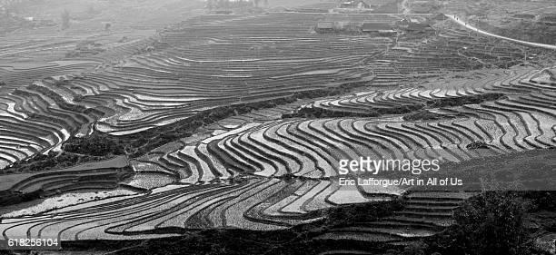 Terrace paddy fields sapa Vietnam on February 2 2011 in Sa Pa Vietnam