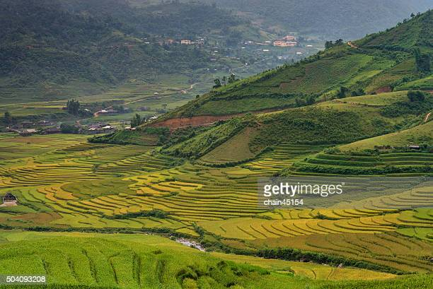 Terrace rice field with mountain in Vietnam, Asian