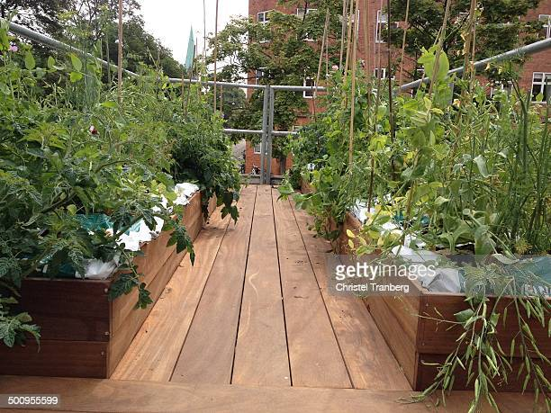 Terrace with herbs