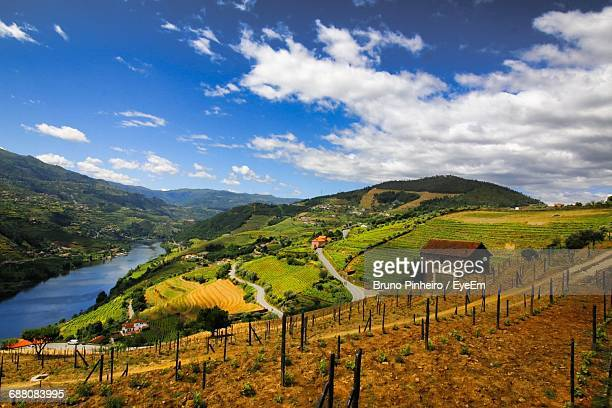 terraced field by duoro river against sky - douro river stock photos and pictures