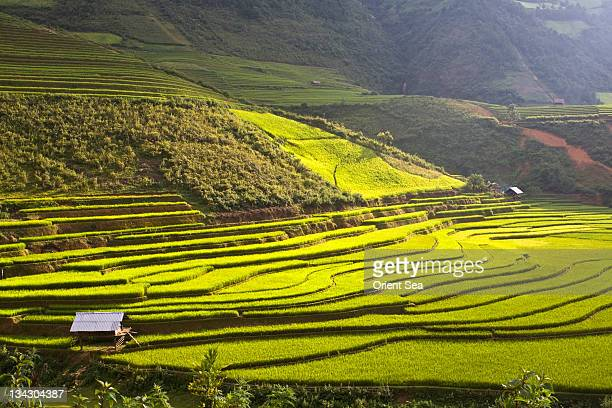 terraced field - mù cang chải stock pictures, royalty-free photos & images