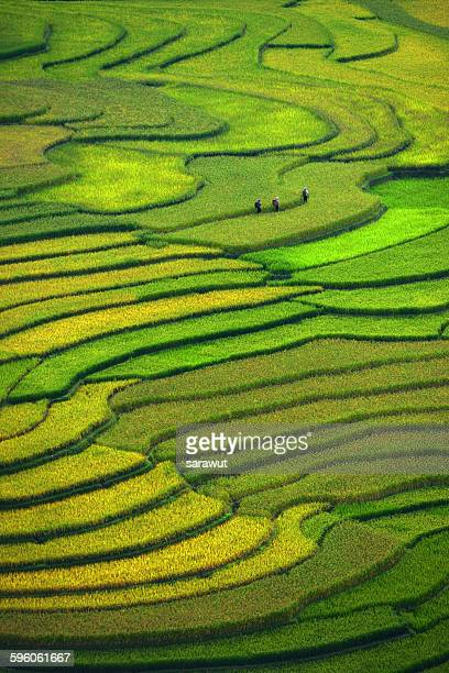 terraced field - rice paddy stock pictures, royalty-free photos & images