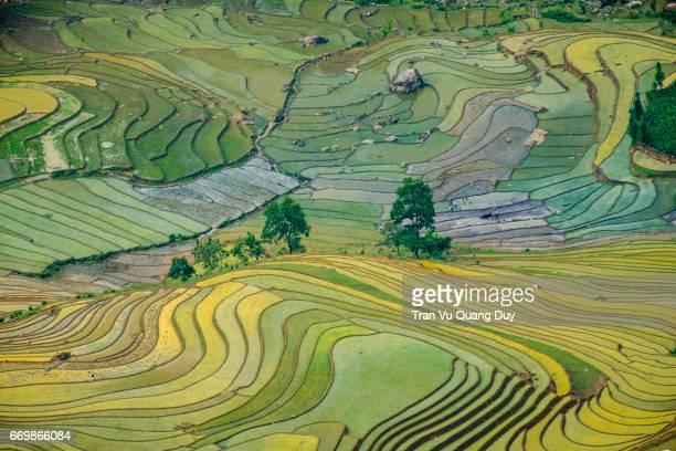 Terraced fields are preparing to grow rice in Hoang Su Phi, Vietnam.