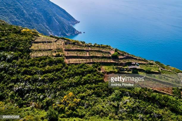 italy liguria cinque terre countryside