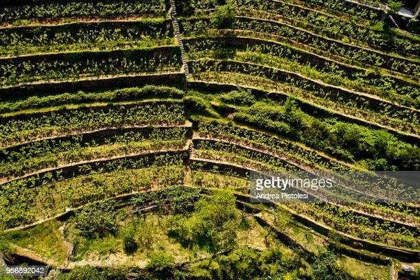 italy liguria cinque terre riomaggiore countryside