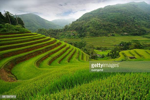 Terraced fields in Hoang Su Phi, Ha Giang, Vietnam