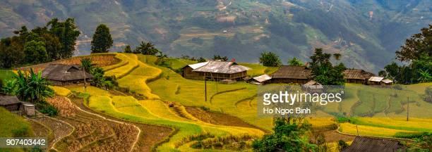 Terraced fields in Hoang Su Phi - Ha Giang, Vietnam
