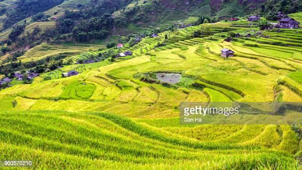 Terraced fields in Hoang Su Phi