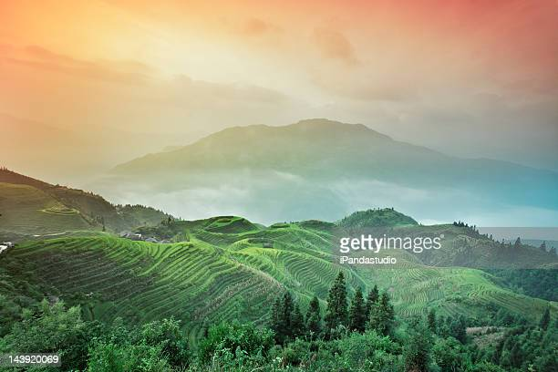 Terraced fields in Longji China