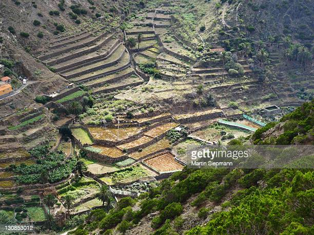 Terraced fields in the Barranco del Valle in Vallehermoso, La Gomera island, Canary Islands, Spain, Europe