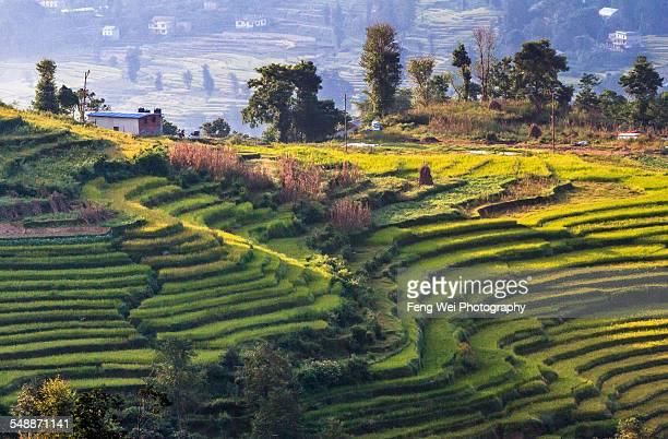 Terraced Fields, Nagarkot, Nepal