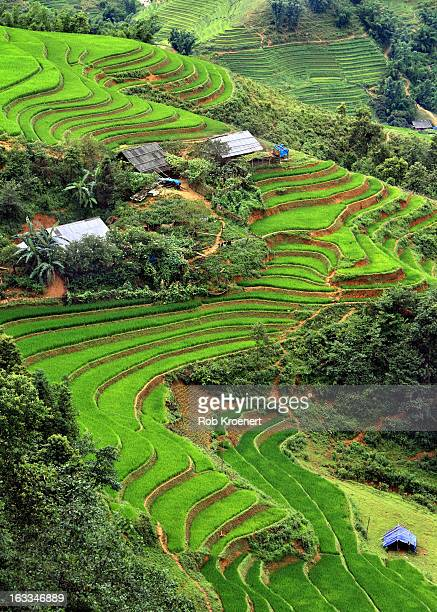 terraced fields of rice on the way to ta van - sapa stock pictures, royalty-free photos & images