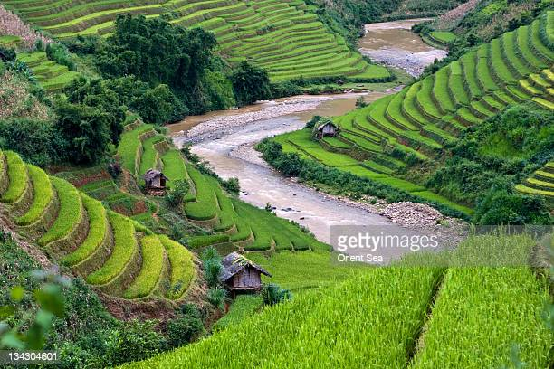 terraced fields - mù cang chải stock pictures, royalty-free photos & images