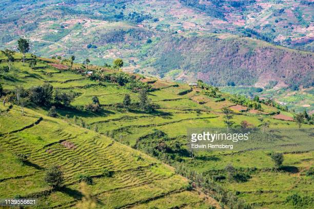 terraced hillside - キガリ ストックフォトと画像