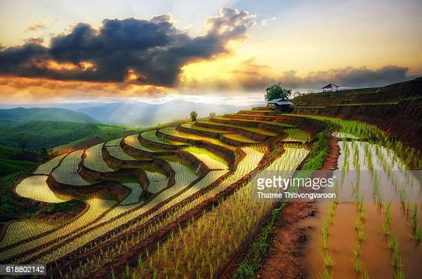 terraced paddy field in mae-jam village , chaingmai province , thailand - reisterrasse stock-fotos und bilder
