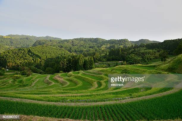 terraced paddy fields - chiba city stock pictures, royalty-free photos & images