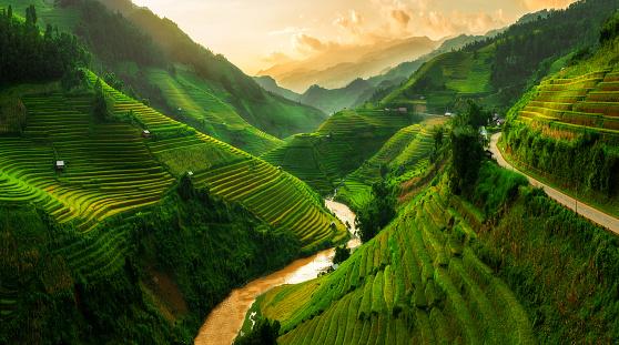 Terraced rice field in Mu Cang Chai, Vietnam 624183176