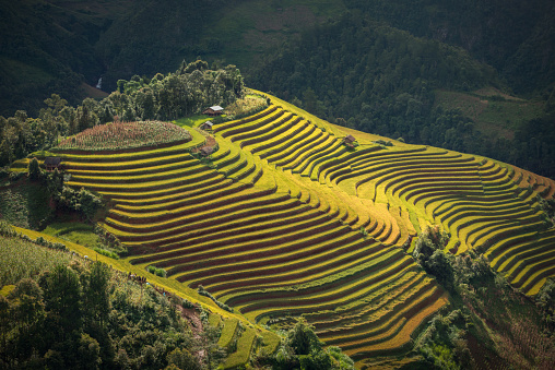 A terraced rice field in Mu Cang Chai, Vietnam. - gettyimageskorea