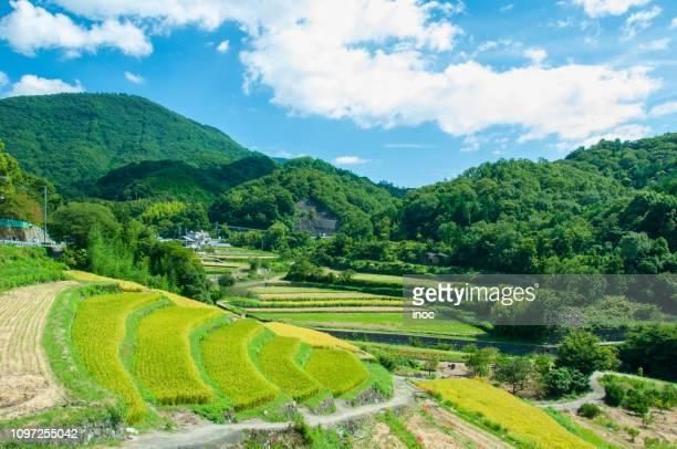 terraced rice field in shodoshima - 郊外の風景 ストックフォトと画像
