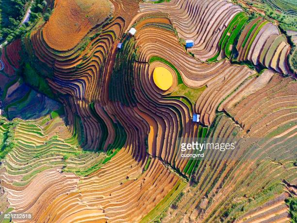 terraced rice field in water season from above - indonesia photos stock photos and pictures