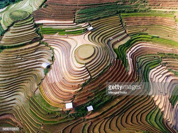 terraced rice field in water season in mu cang chai, vietnam. - indonesia photos stock photos and pictures