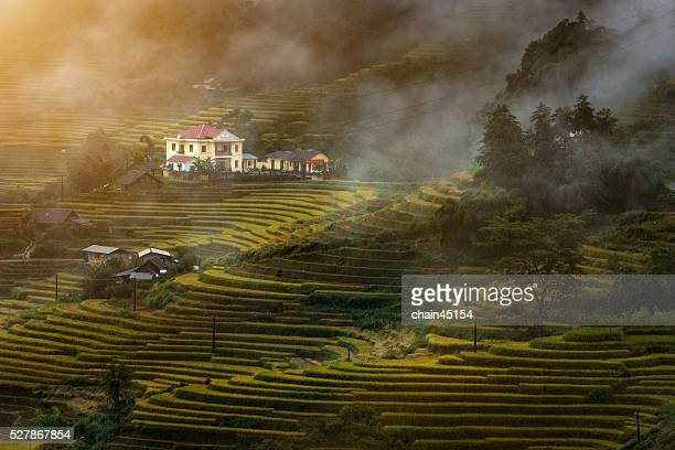 Terraced Rice Field with house on the mountain in Vietnam