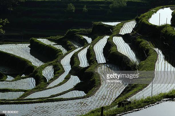 Terraced rice fields are seen in the Nakayama District of Shodo Island Kagawa Prefecture Japan on Saturday May 14 2016 Japan's Cabinet Office will...