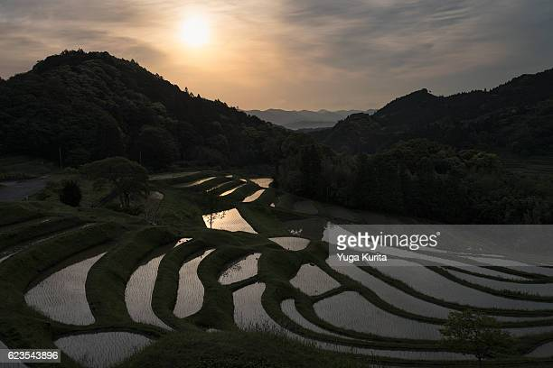 terraced rice fields at sunrise - chiba city stock pictures, royalty-free photos & images